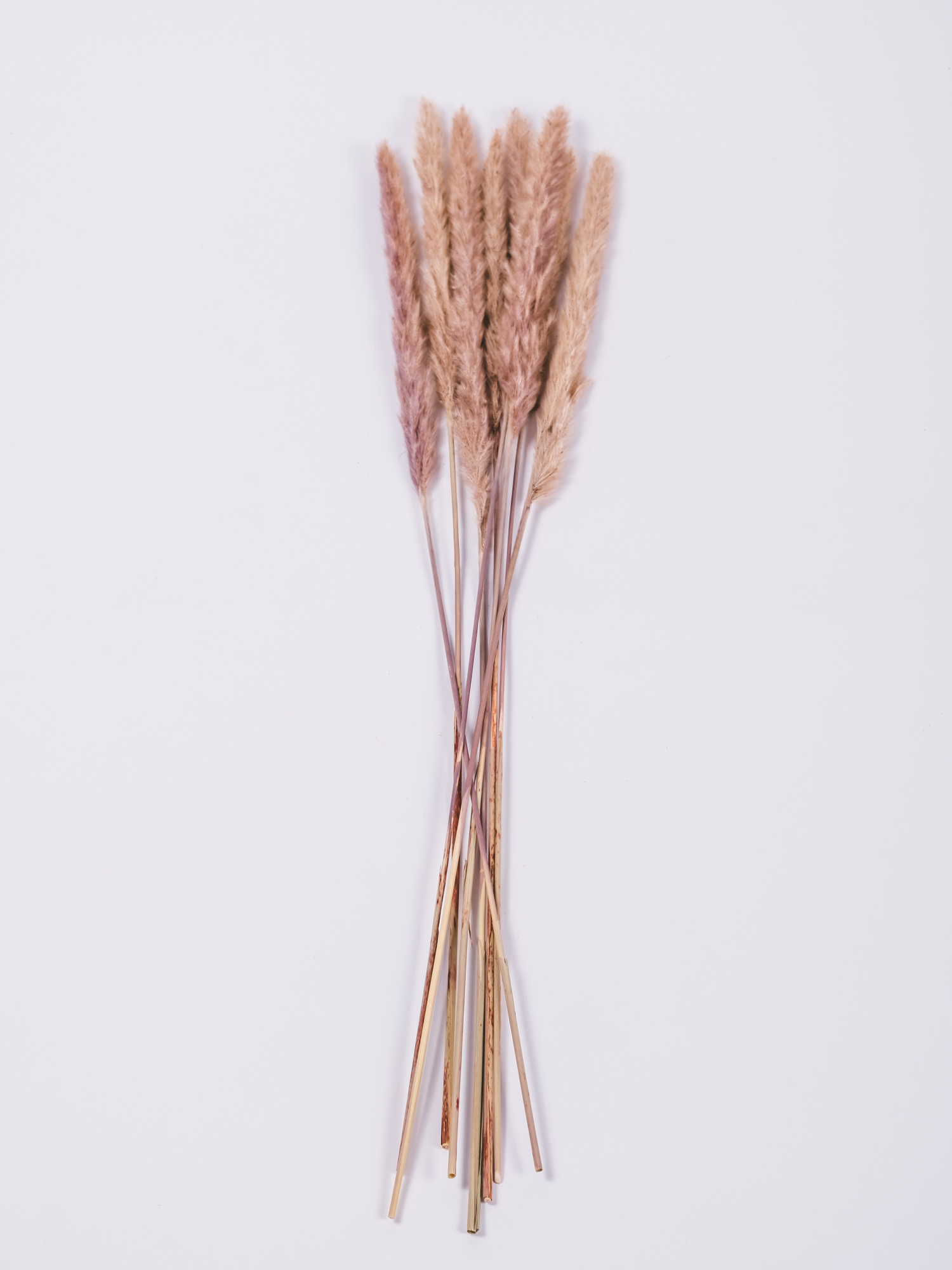 Gedroogde Fluffy Pampas Pluimen-Reed Bunch